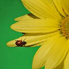 Ladybug on Flower by EmmaLeigh
