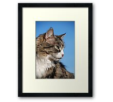 Senior tabby cat Framed Print
