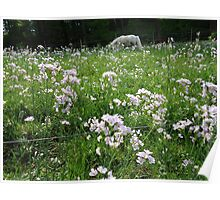 flower, grassland  beauty.... Poster