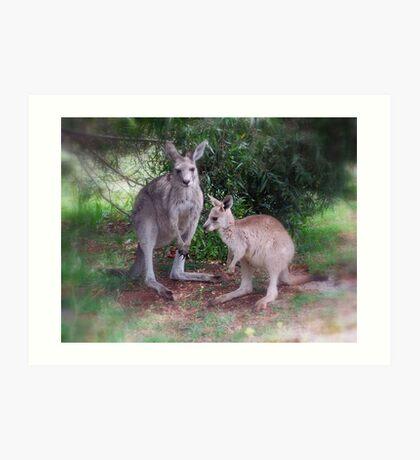 Kangaroos at Buchan Art Print