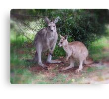 Kangaroos at Buchan Canvas Print