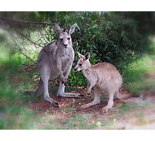 Kangaroos at Buchan Photographic Print