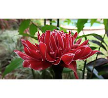 Flower in Cairns Photographic Print