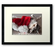 Libby - Maine Coon cat and her favourite toy Framed Print