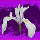Iris by RosiLorz