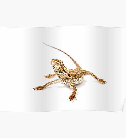 Bearded Dragon - pogona vitticeps Poster