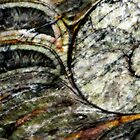 Ammonite Fossil by Marilyn Harris