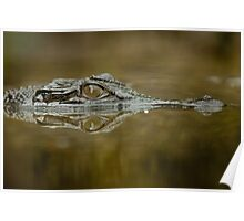 Croc reflection Poster