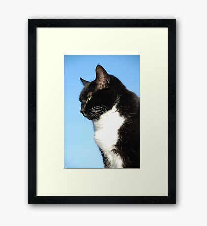 Black and white cat portrait Framed Print