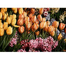 Painted Tulips Photographic Print