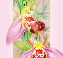 Bee Orchid in the pink by Sarah Trett