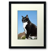 Senior black and white cat Framed Print