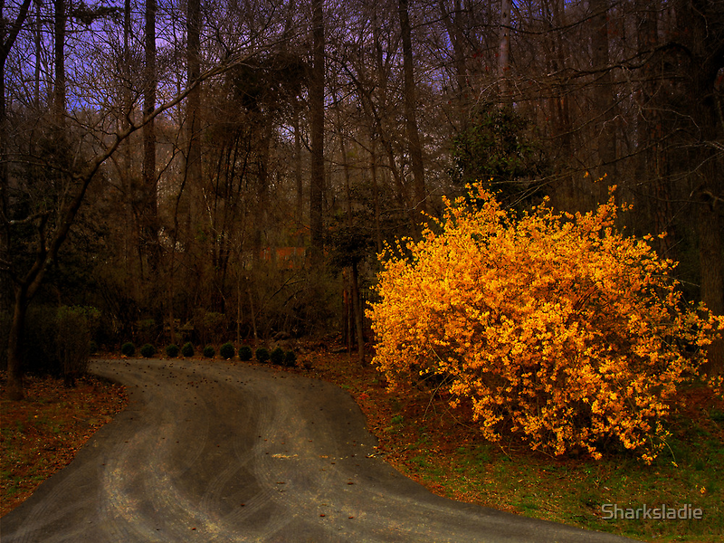 Country Road by Sharksladie