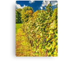 Vineyard-autumn painting, oil painting, nature Canvas Print
