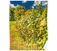Vineyard-autumn painting, oil painting, nature Poster