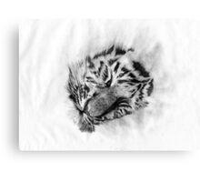 Baby Tiger sleeping Canvas Print