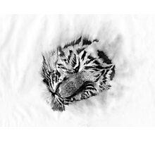 Baby Tiger sleeping Photographic Print