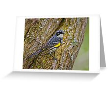 Meal on a Tree Greeting Card