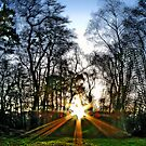 The Light by purposemaker909