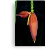 Deep orange banana flower Canvas Print