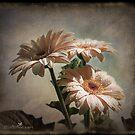 Dramatic floral by Olga