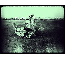 iPhone flowers Photographic Print