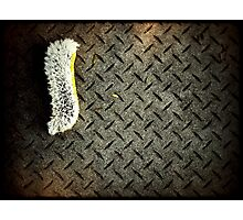 iPhone brush II Photographic Print