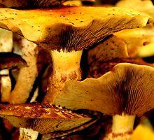 fungi by Dawn Barger