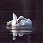 Beautiful Swan by SPPhotography