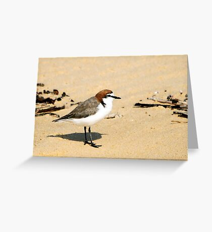 Red-capped Plover Greeting Card