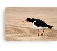"""Go Away"" - Pied Oystercatcher, Tathra Beach Canvas Print"