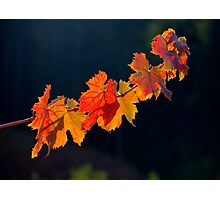Leafs On A Twig Photographic Print