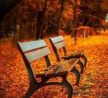 Autumn in the Park by Edmond  Hogge