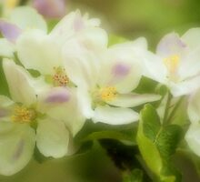 Apples n Blossoms by strgaZeNn