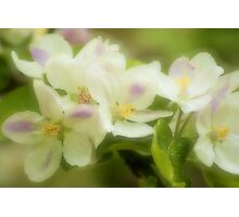 Apples n Blossoms Photographic Print