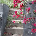 Abandoned Bougainvillea by Denice Breaux