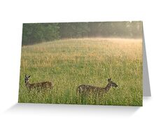 Two Deer in Cades Cove Greeting Card