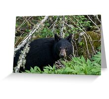 Black Bear - GSMNP Greeting Card