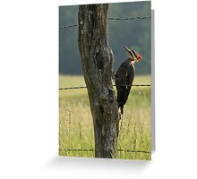 Pilleated Woodpecker II Greeting Card