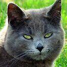 Green Eyes!  by PatChristensen