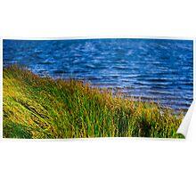 Riverside Reeds - Nicholson River Poster