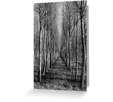 Willow Plantation - Swan Hill Greeting Card