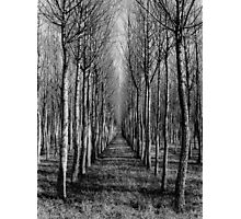 Willow Plantation - Swan Hill Photographic Print