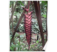 Wierd Plant Poster