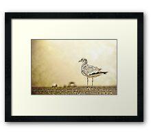 The Seagull Framed Print