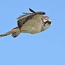 In flight by Carl LaCasse