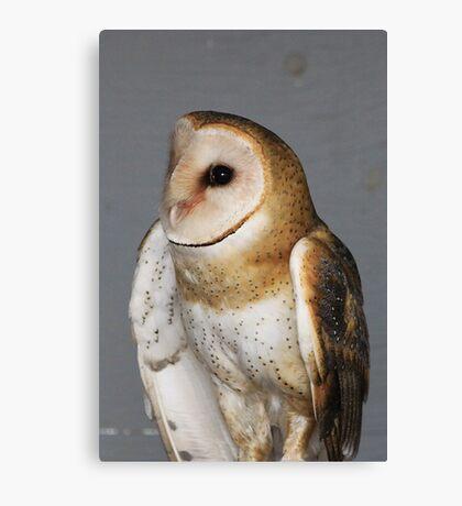 Barn Owl - Casper Canvas Print