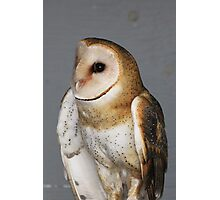 Barn Owl - Casper Photographic Print