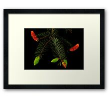 STAGES OF GROWTH IN NATURE Framed Print