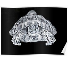 THE FIERY SPIRIT #turtle Poster